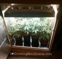 Diy Grow Tent Material & Cupboard Grow Room Cannabis