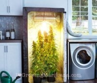 How To Build An Indoor Marijuana Grow Room