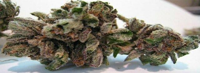 Bubba Kush strain fragrance