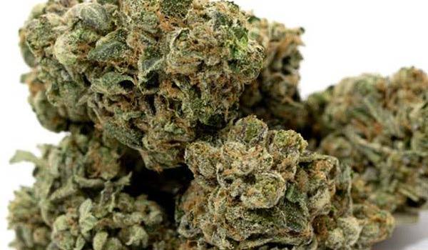 Master Kush Strain Effects-medical marijuana doctors in pa