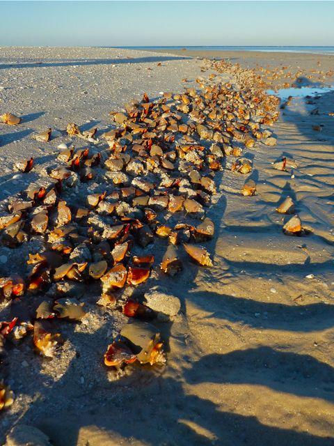 Beachcombing Blogger-Palooza