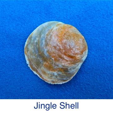 Jingle Shell ID