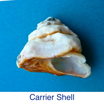 Carrier Shell ID