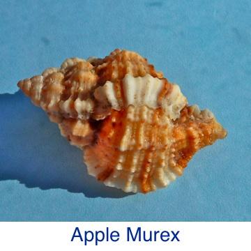 Murex- Apple ID