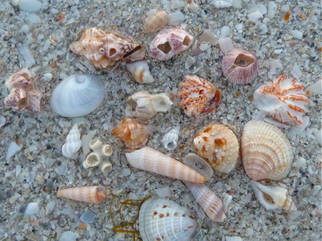 Miniature Seashell Zone