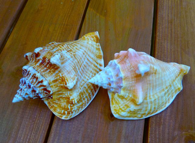 Road Trip For Seashells In The Florida Keys