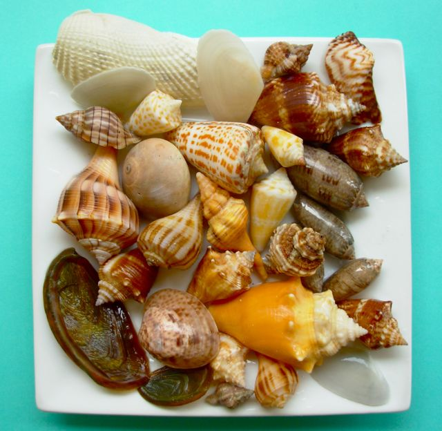 A Plate Stuffed With Shells