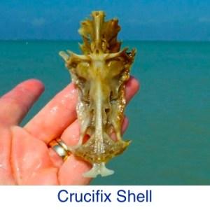 Crucifix Shell