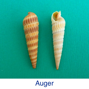 Auger Shell ID