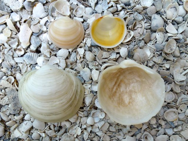 Dear Fragile Seashells, Please Don't Break On The Way Home