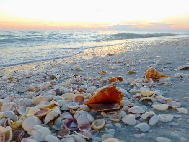 Best Beach To Find Shells In Destin Fl