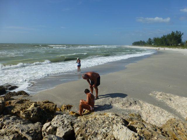 Waiting For Seashells From Hurricane Sandy
