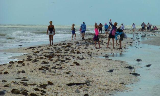 Hurricane Sandy Sprinkles Seashells On Sanibel