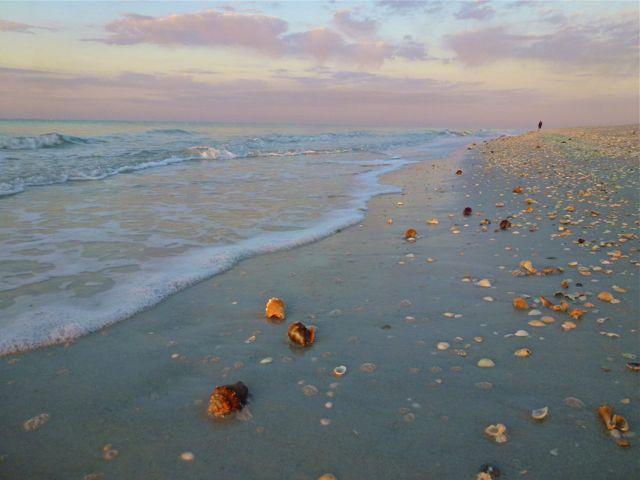 Sanibel Island Hotels: Florida Fighting Conch