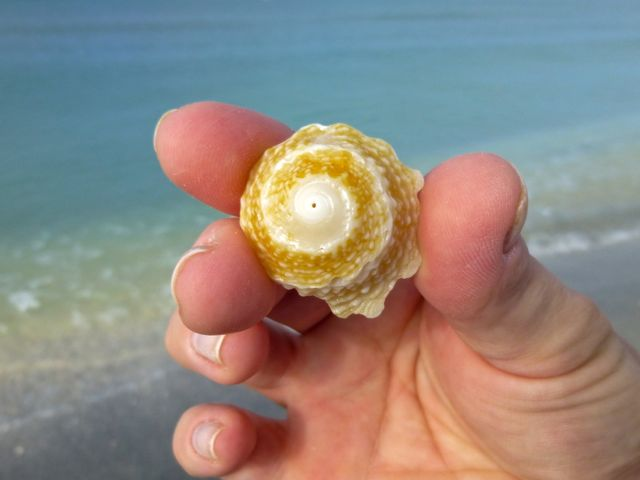 Seashell Star Of The Day