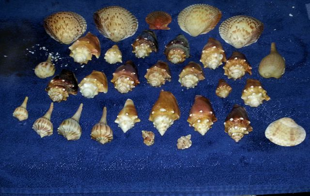 Shells Sweep In And Shells Sweep Out