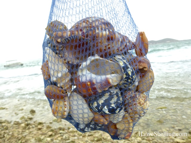 Our Weekend Collecting Seashells In Guantanamo Bay, Cuba