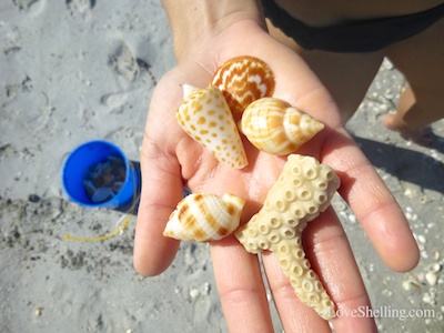 Happiness is… Seashells, Sunshine and Rainbows