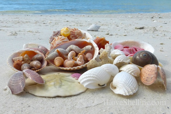 Boating and Beach Combing- Near Lovers Key
