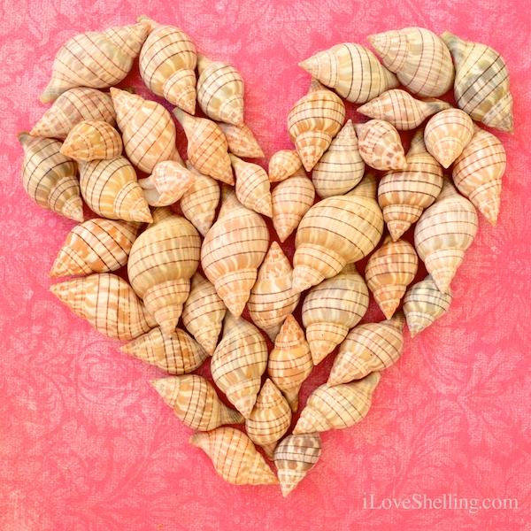 Happy Rose Petal Shellentines Day!