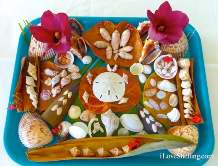 seashell display from iLoveShelling Sanibel Shellabaloo