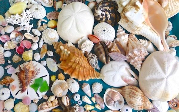 Shelling Trip To Grand Bahama Island