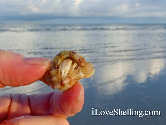 Healthy Living On The Coast Of Sanibel Island