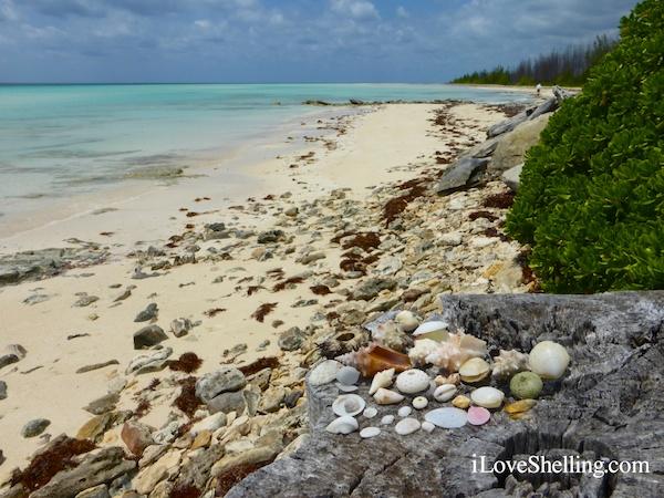 shelling the bahamas