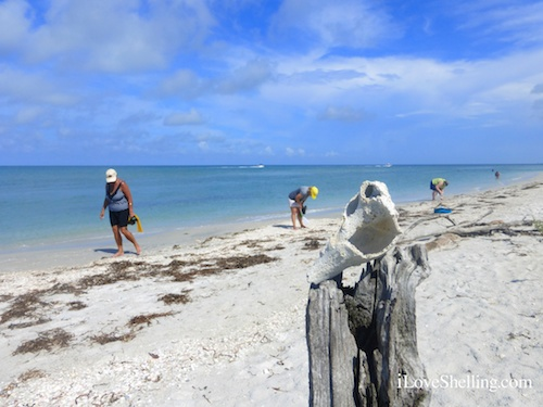 collecting sea shells on a Florida island