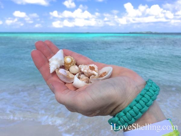 beach combing Abaco Bahamas