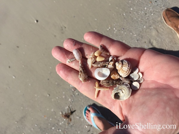 Shells found by Hilton Clearwater