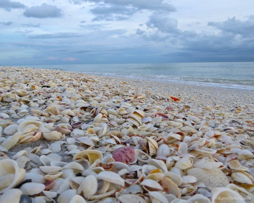 Seashells And The Gulf Of Mexico