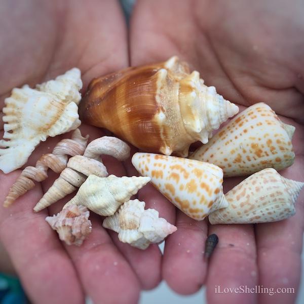 Shelltastic Shell Trip