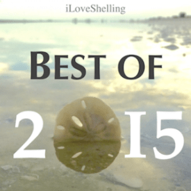 best seashell beach of 2015