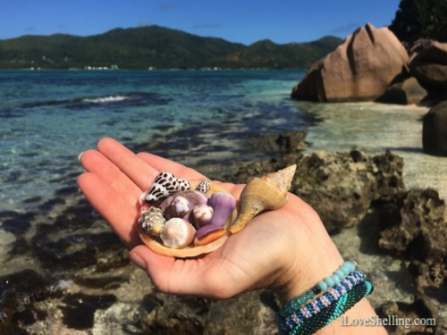 Where in the world are we finding Seashells