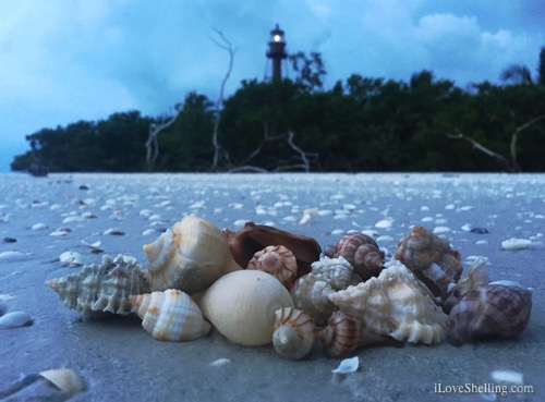 Seashell Treasures Brought to the Islands By Hermine