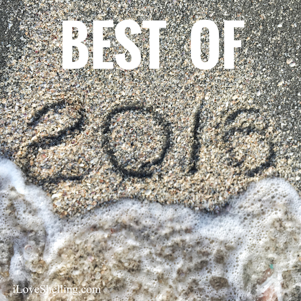 2016 Best Of i Love Shelling