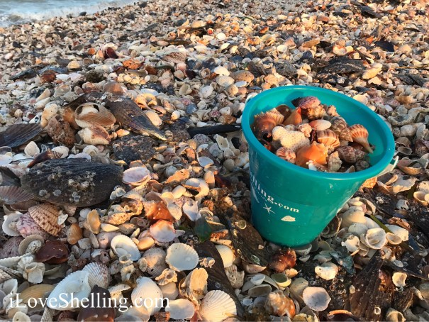 turquoise shell bucket on mound of seashells