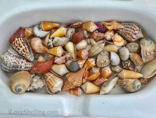 boating for seashells goodland florida