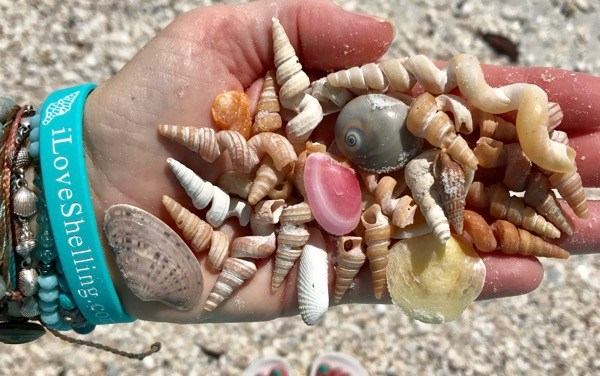 Shelldazed… Shells For Days