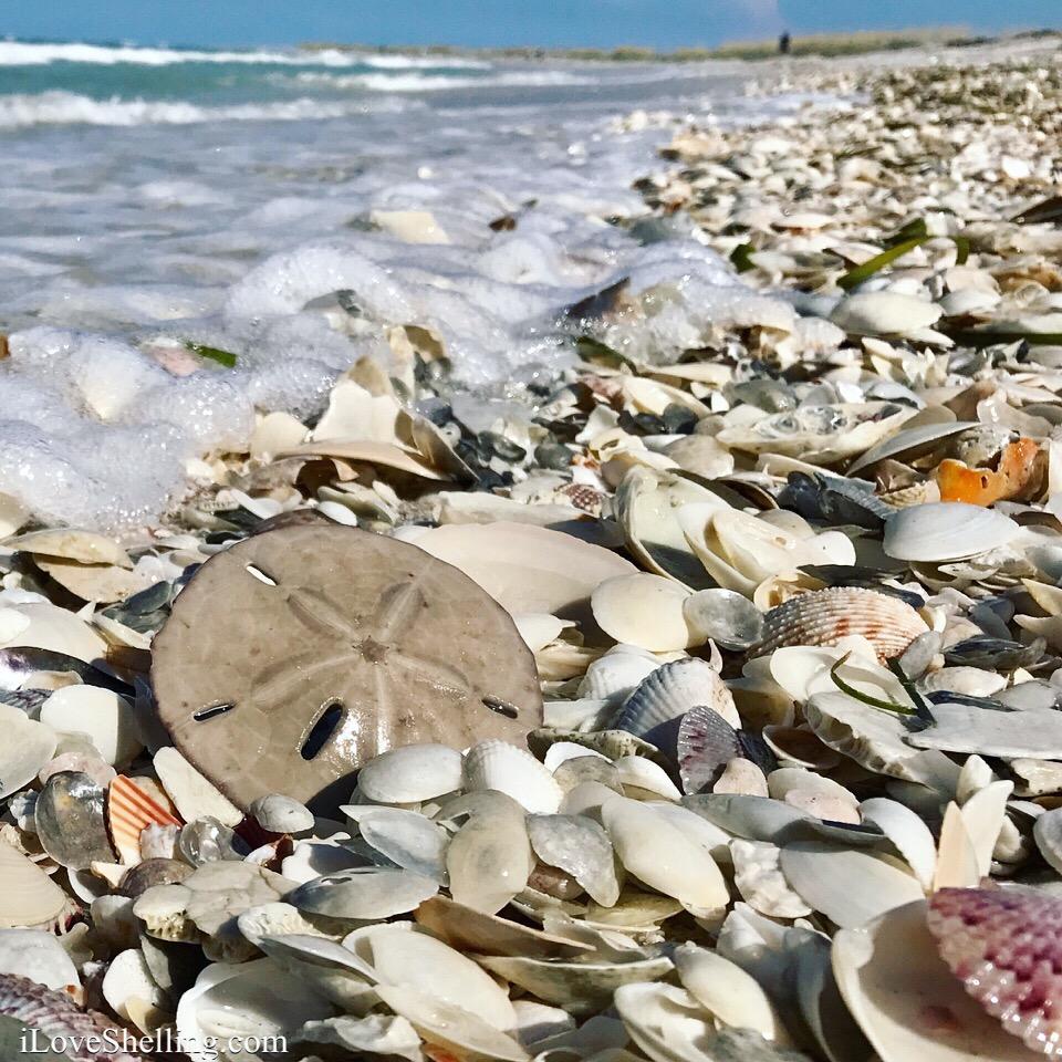 Sanibel Beach: New Video- August Shelling Adventure On Cayo Costa