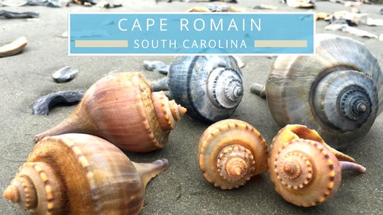 Cape Romain SC beachcombing