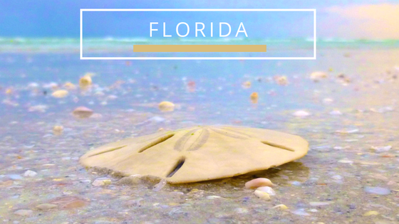 Florida Beachcombing Travel Destinations