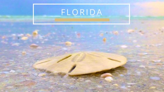 Florida seashells beachcombing