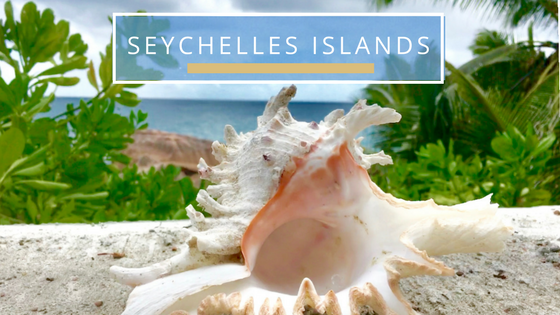 Finding seashells in Seychelles Islands Indo Pacific