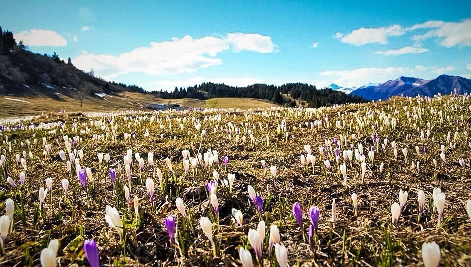 7 fiori di montagna che dovresti proprio conoscere  I