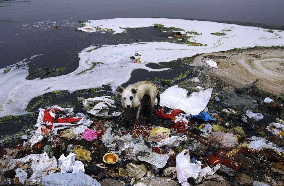 Le foto del fiume Yamuna uno dei pi inquinati al mondo