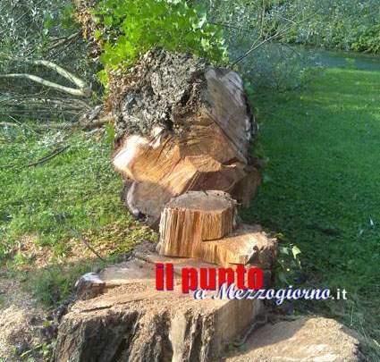 Schiacciato da una quercia, muore operaio 35enne di Arpino