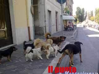 La piaga dei cani randagi, a Monte San Giovanni Campano la proposta di un'oasi animalista