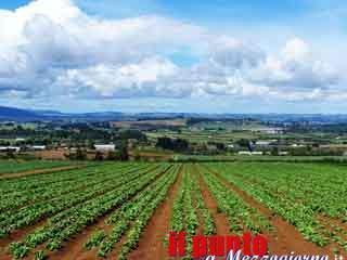 Diserbanti per agricoltura irregolari sequestrati in rivendite di Aprilia e Anagni